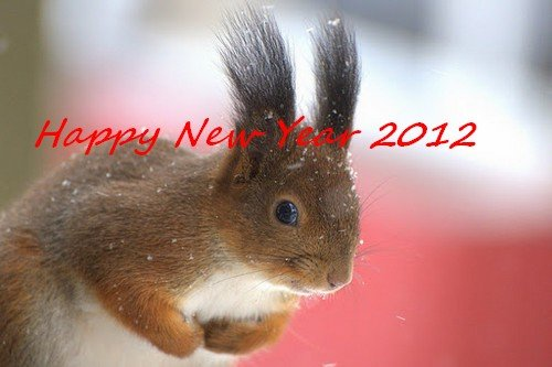 TANTI AUGURI DI BUON 2012 A TUTTI dans Papa Benedetto XVI Squirrel-In-The-Snow-Mustamae-Estonia-SunCat3
